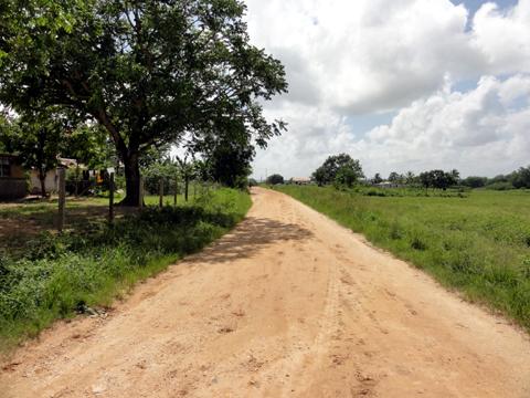 way_to_robaina_farm