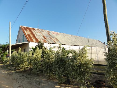 vegas_robaina_farm_-11