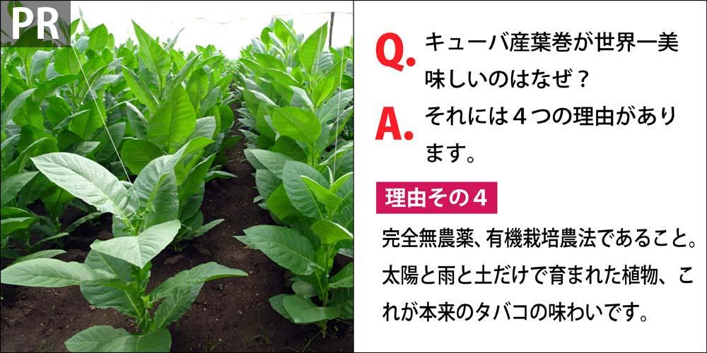 [PR]Q.キューバ産葉巻が世界一美味しいのはなぜ? A.それには4つの理由があります。 理由その4、完全無農薬、有機栽培農法であること。太陽と雨と土だけで育まれた植物、これが本来の植物の味わいです。