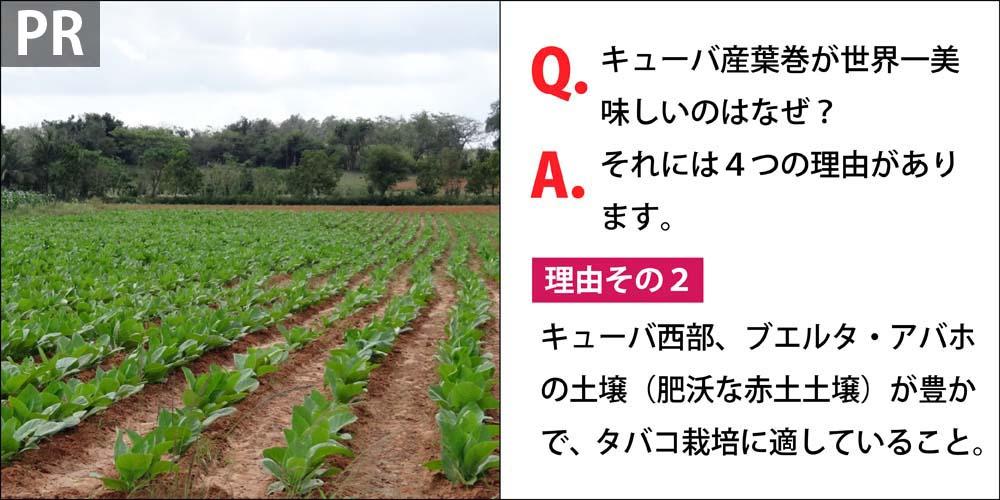 [PR]Q.キューバ産葉巻が世界一美味しいのはなぜ? A.それには4つの理由があります。 理由その2、キューバ西部、ブエルタ・アバホ地区の土壌(肥沃な赤土土壌)が豊かで、タバコ栽培に適していること。
